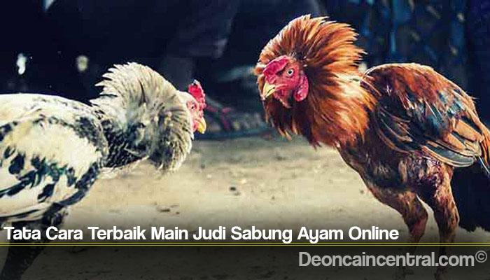 Tata Cara Terbaik Main Judi Sabung Ayam Online